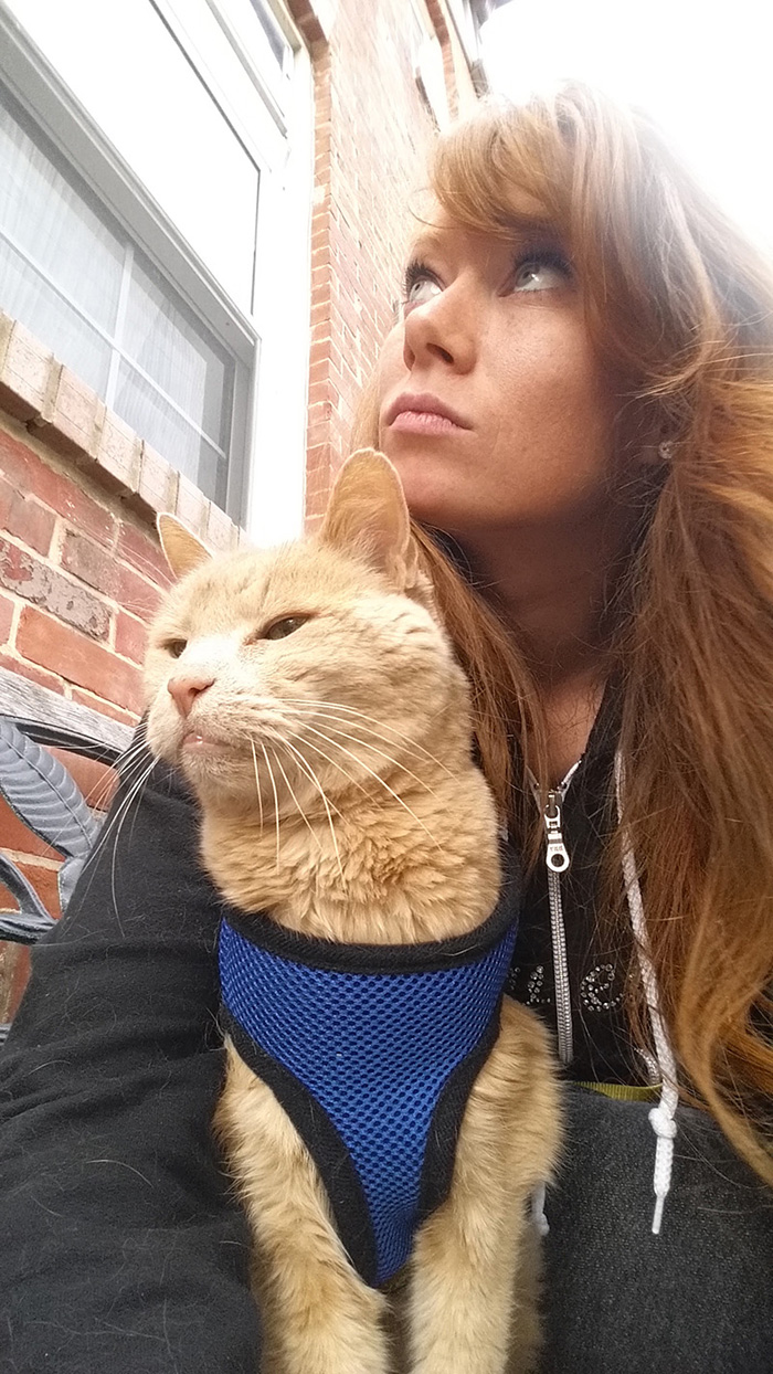 gato-adoptado-enfermo2