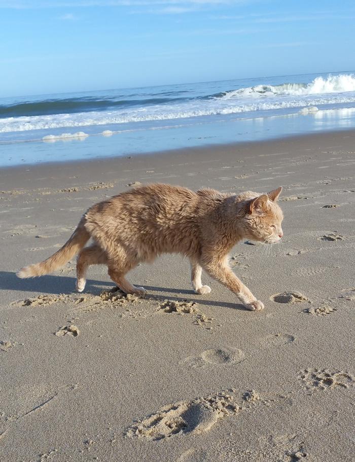 gato-adoptado-enfermo3