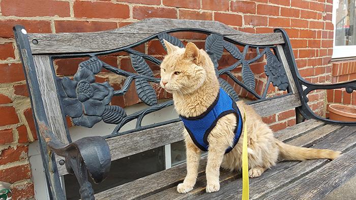 gato-adoptado-enfermo5