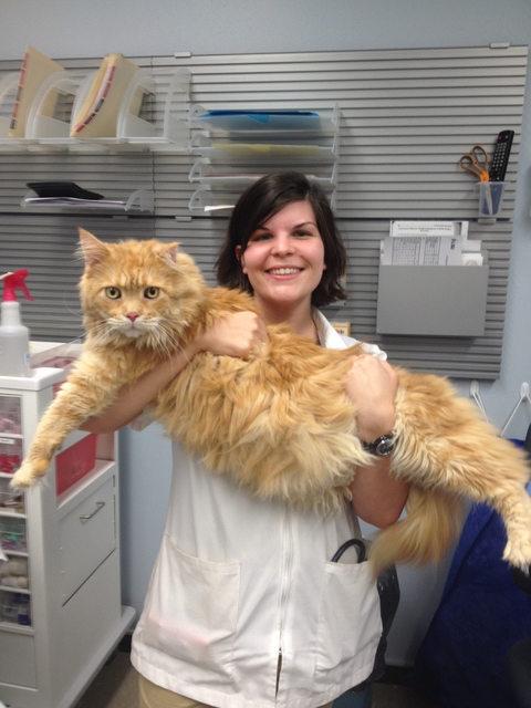 gato-gigante10