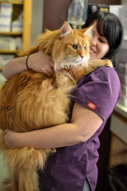 gato-gigante11