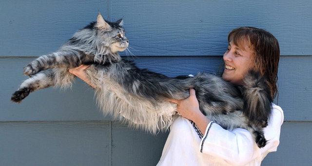gato-gigante5