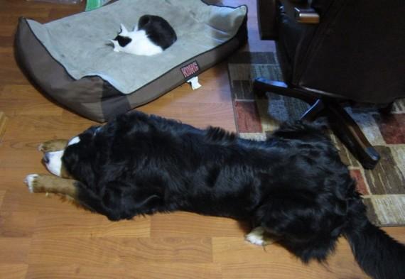 gatos roban camas perros brillante