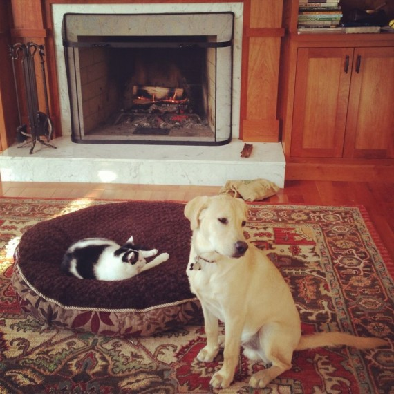 gatos roban camas perros chimenea