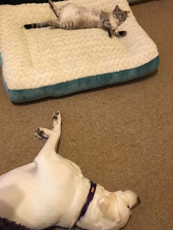 gatos roban camas perros comodos