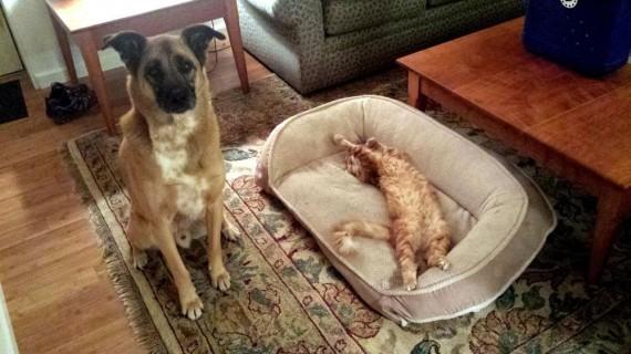 gatos roban camas perros descarado