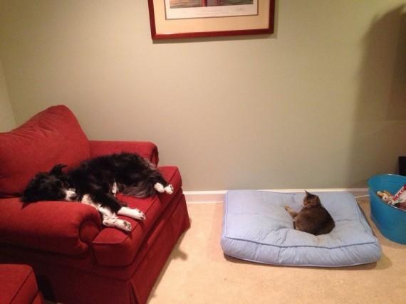 gatos roban camas perros ganador