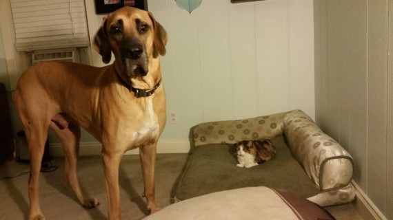 gatos roban camas perros grandes