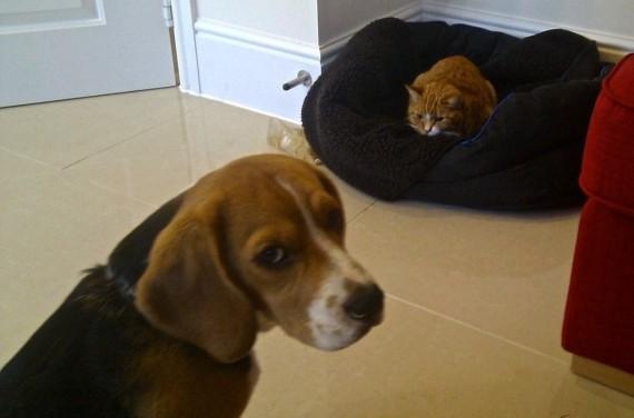 gatos roban camas perros hostinado