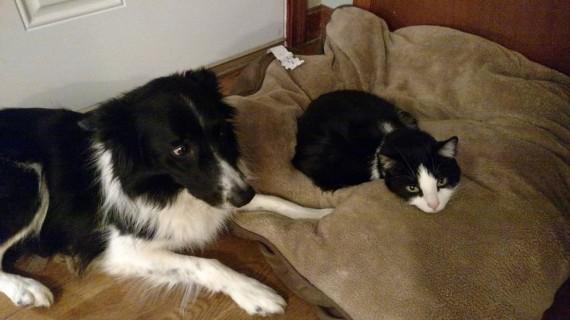 gatos roban camas perros iguales