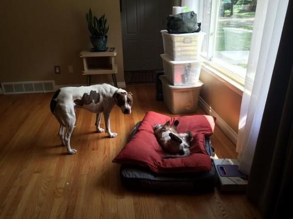 gatos roban camas perros luz