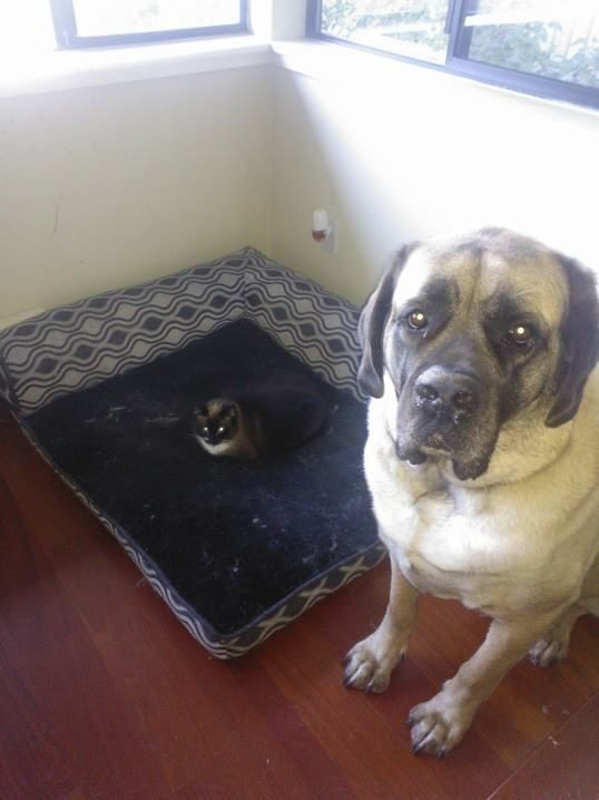 gatos roban camas perros malvados