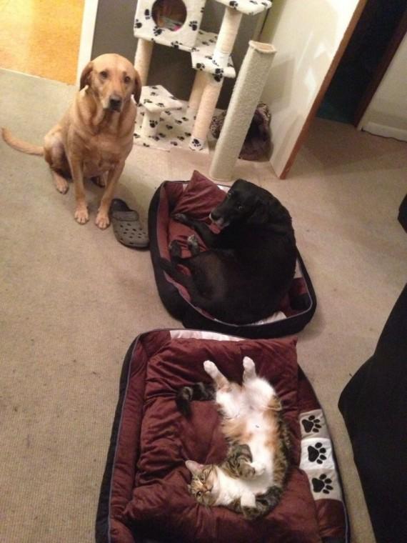 gatos roban camas perros miedo