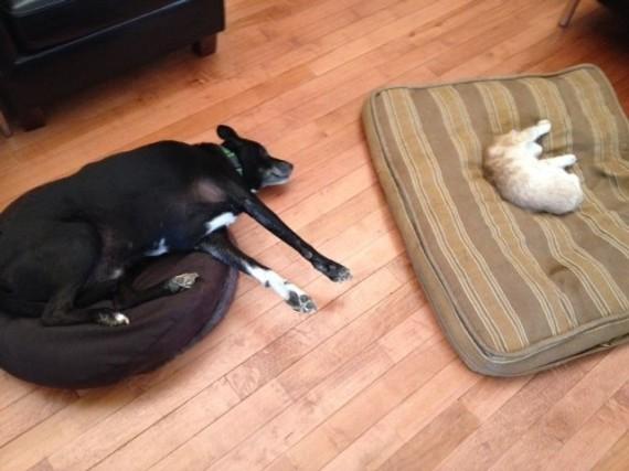 gatos roban camas perros ojo por ojo