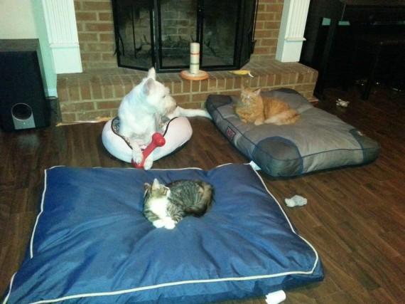 gatos roban camas perros partida doble