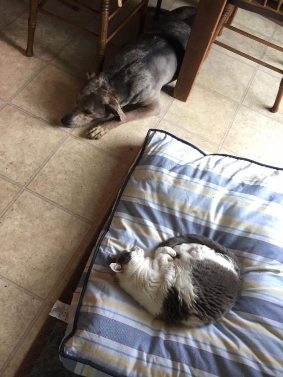 gatos roban camas perros sillas