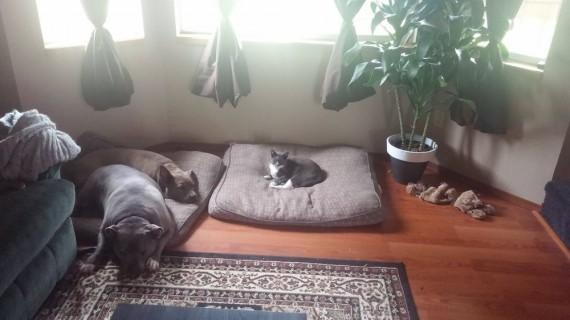 gatos roban camas perros solidario