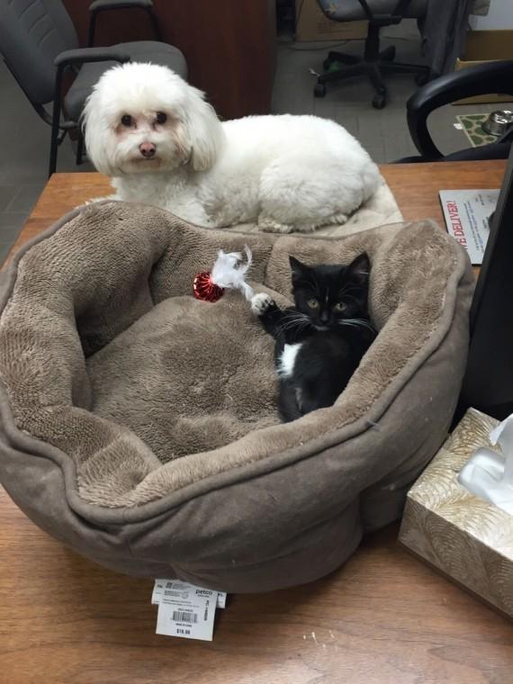 gatos roban camas perros ternura