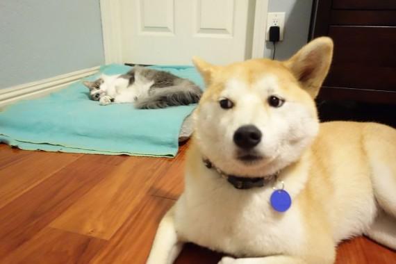 gatos roban camas perros