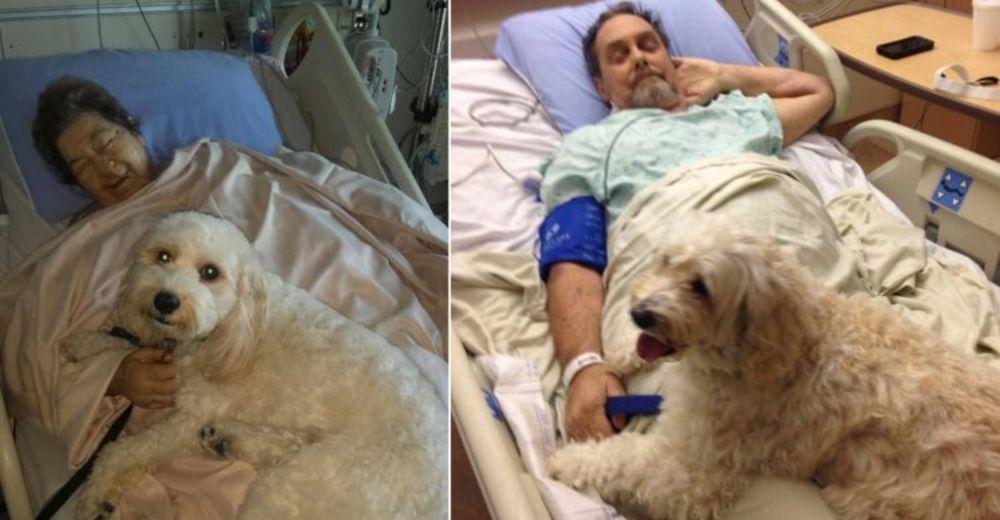 hospital mascotas destacada