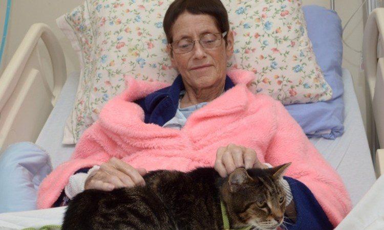 hospital mascotas gato