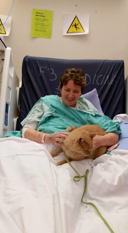 hospital mascotas gato feliz