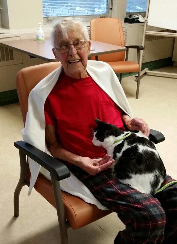 hospital mascotas gato gordito
