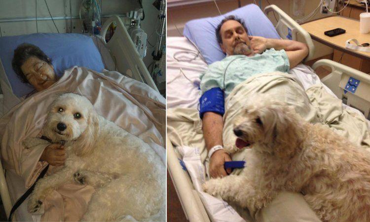 hospital mascotas pacientes felices
