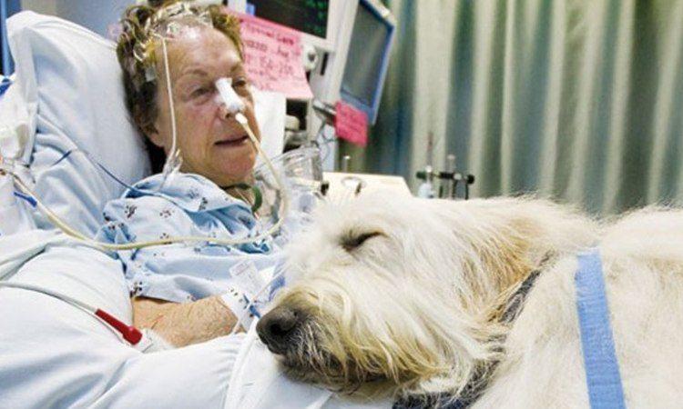 hospital mascotas perro dormido