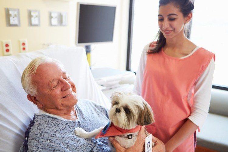 hospital mascotas pionero