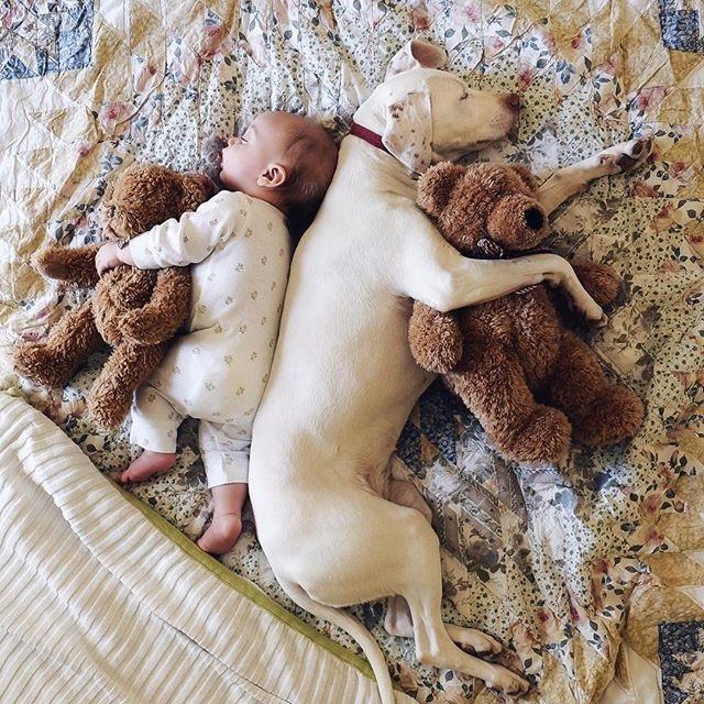 imagenes tiernas bebe perrita amor canino 1