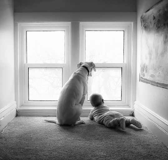 imagenes tiernas bebe perrita amor canino 10-1