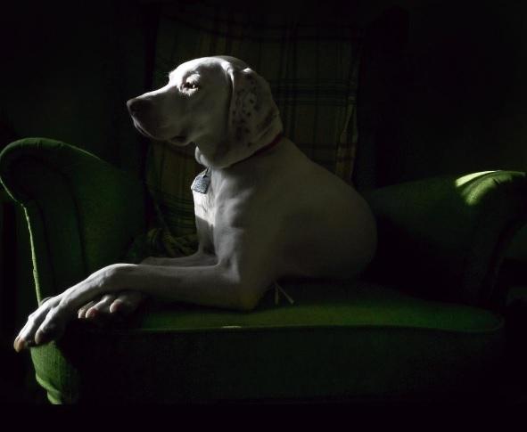 imagenes tiernas bebe perrita amor canino 12