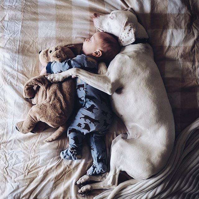 imagenes tiernas bebe perrita amor canino 14