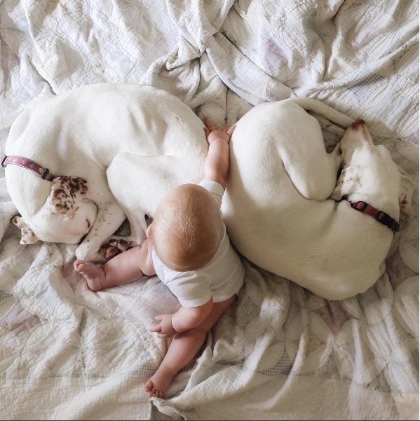 imagenes tiernas bebe perrita amor canino 17