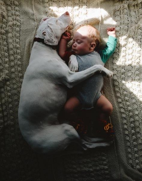 imagenes tiernas bebe perrita amor canino 18