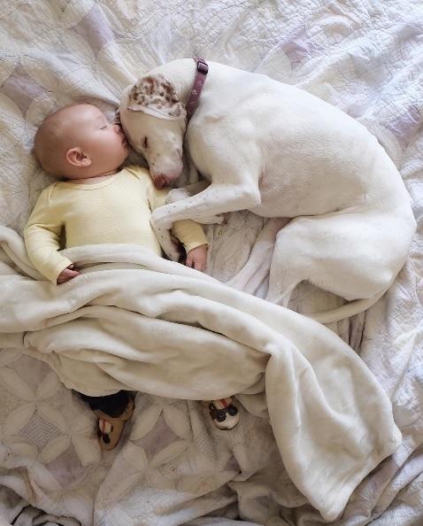 imagenes tiernas bebe perrita amor canino 19