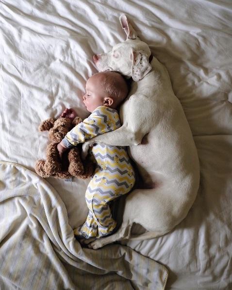 imagenes tiernas bebe perrita amor canino 20