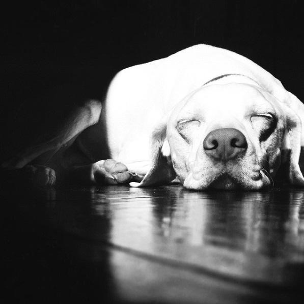 imagenes tiernas bebe perrita amor canino 22