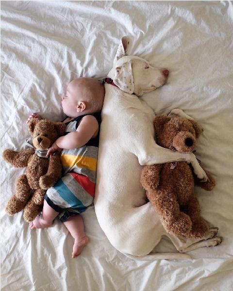imagenes tiernas bebe perrita amor canino 4