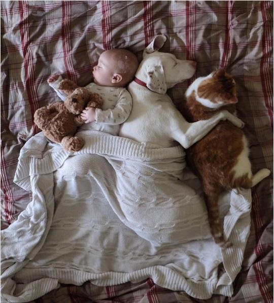 imagenes tiernas bebe perrita amor canino 5