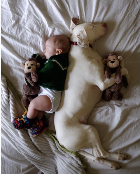 imagenes tiernas bebe perrita amor canino 6