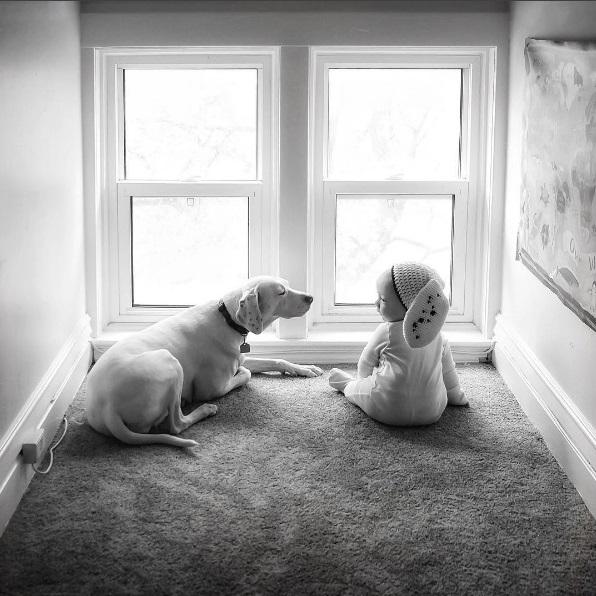 imagenes tiernas bebe perrita amor canino 7