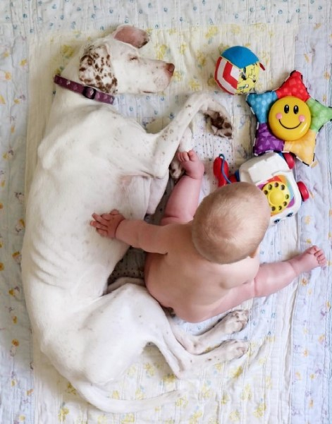 imagenes tiernas bebe perrita amor canino 8-1