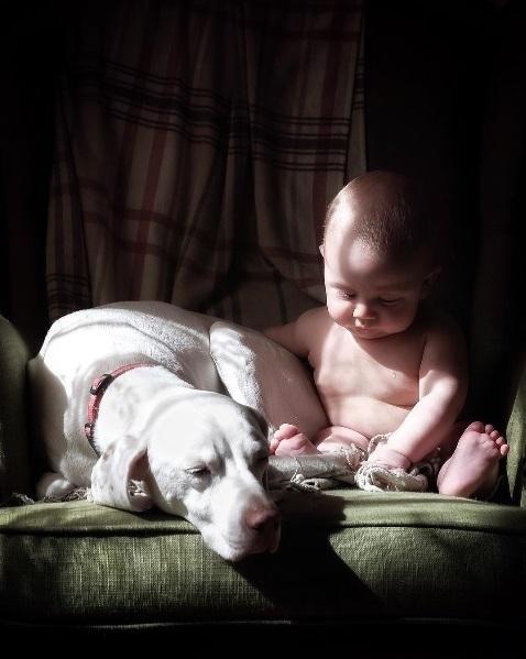 imagenes tiernas bebe perrita amor canino 9