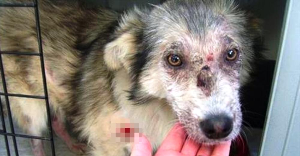 Tenía pánico a los perros… Pero superó su miedo salvando una vida