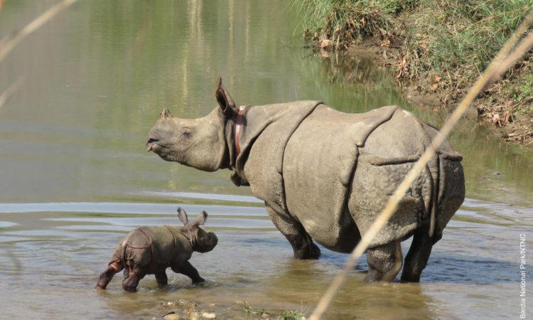 nace-rino-nepal