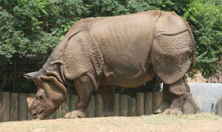 nace-rino-nepal2