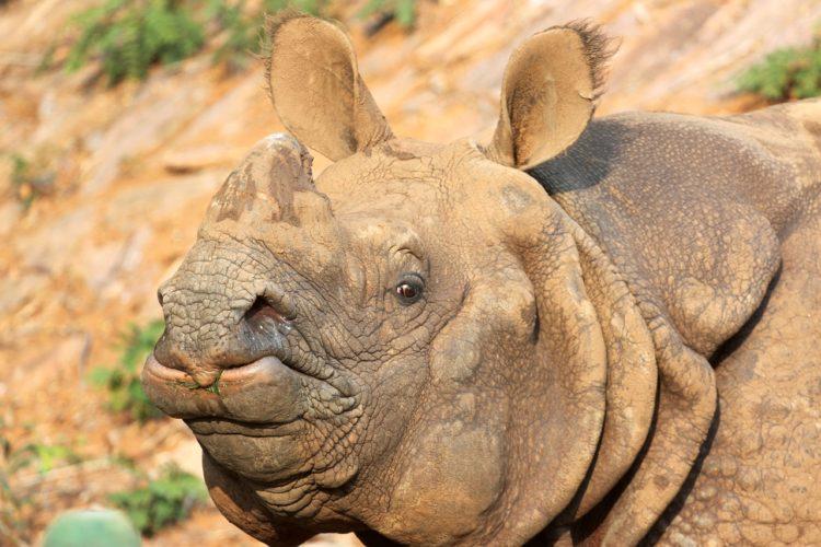 nace-rino-nepal3