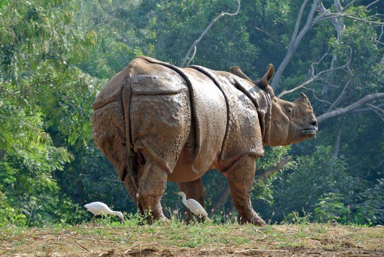 nace-rino-nepal4